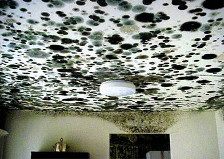 Dampness Is Most Likely To Occur In Overcrowded Houses Or Those That Lack Ropriate Ventilation Heating And Insulation Because Symptoms Of Mold